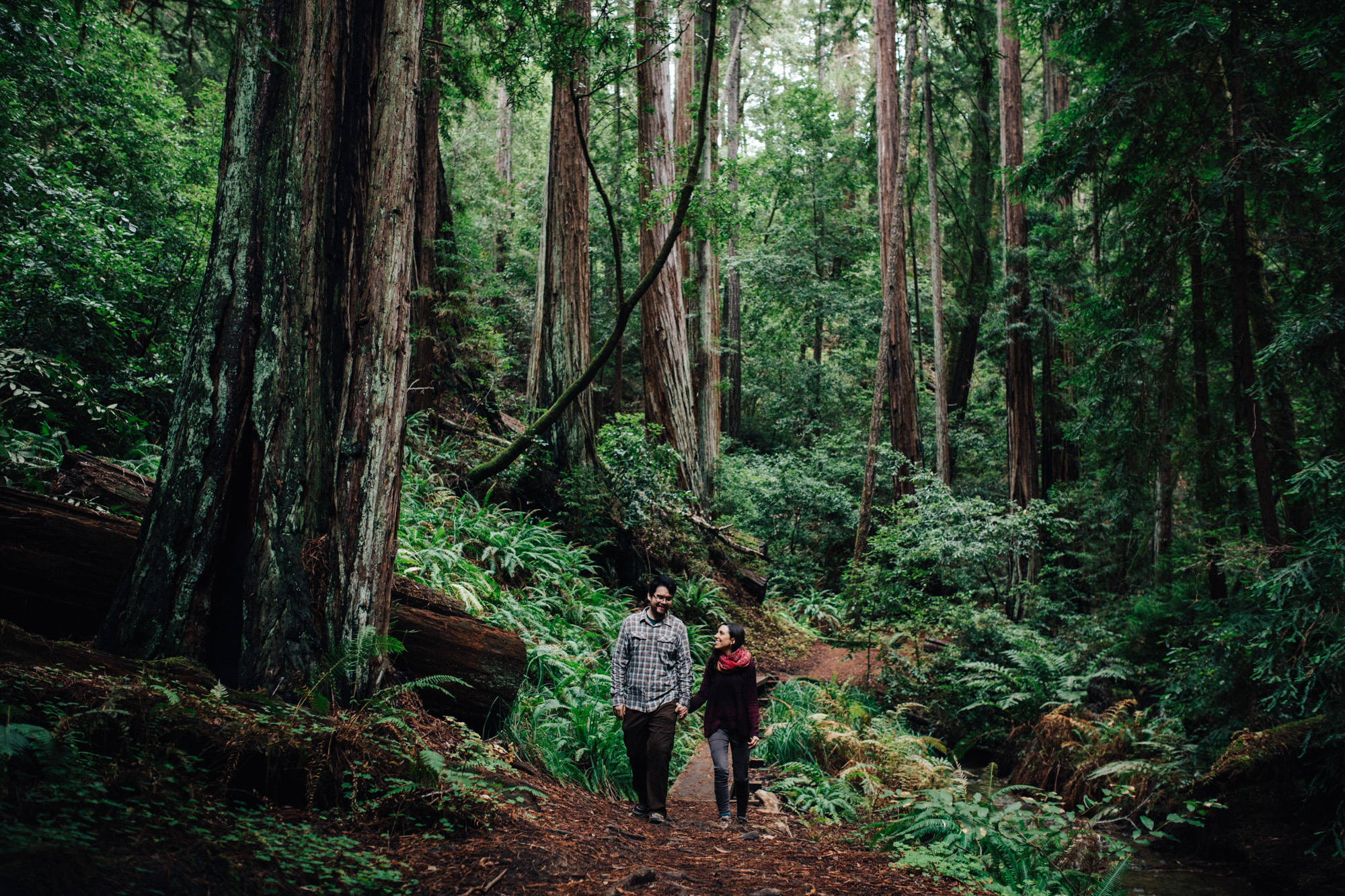 big basin redwoods engagement      amelia  u0026 simon      santa cruz