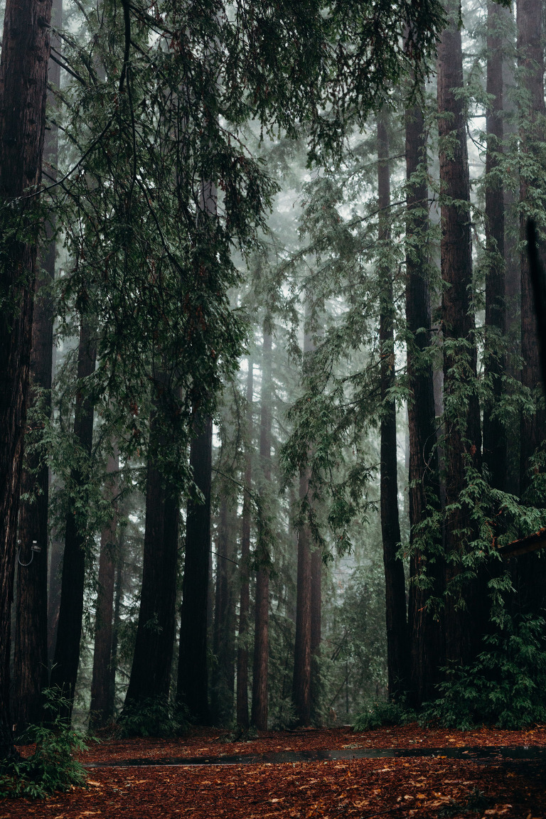 Santa Cruz Mountains Redwood Forest