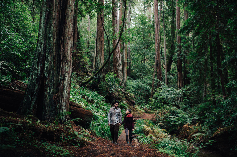 Big Basin Redwoods Engagement