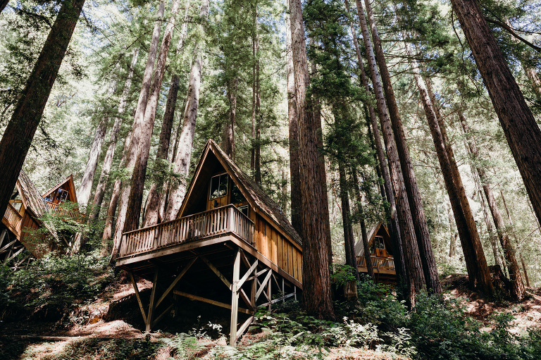 redwood forest wedding venues